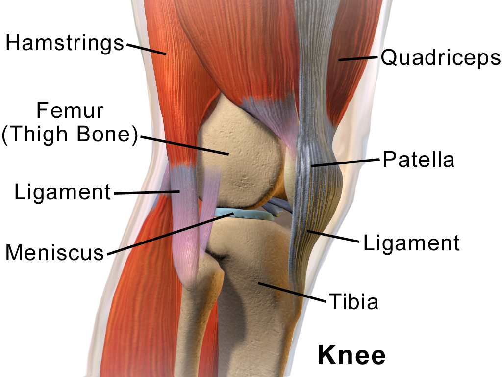 best-compression-for-the-knee