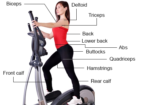 muscles used elliptical trainer